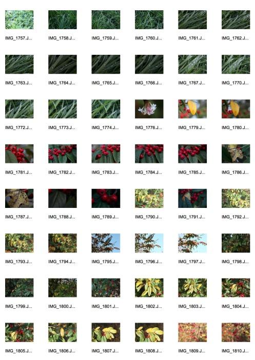 Autumn 3 Contact Sheet 3