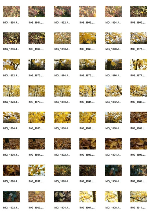 Autumn 3 Contact Sheet 5