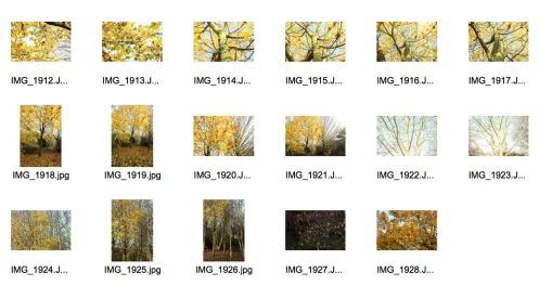Autumn 3 Contact Sheet 6