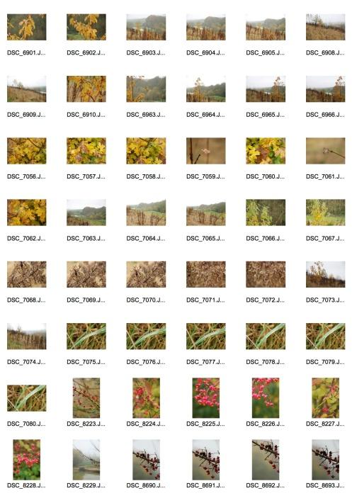 Autumn 4 Contact Sheet 1