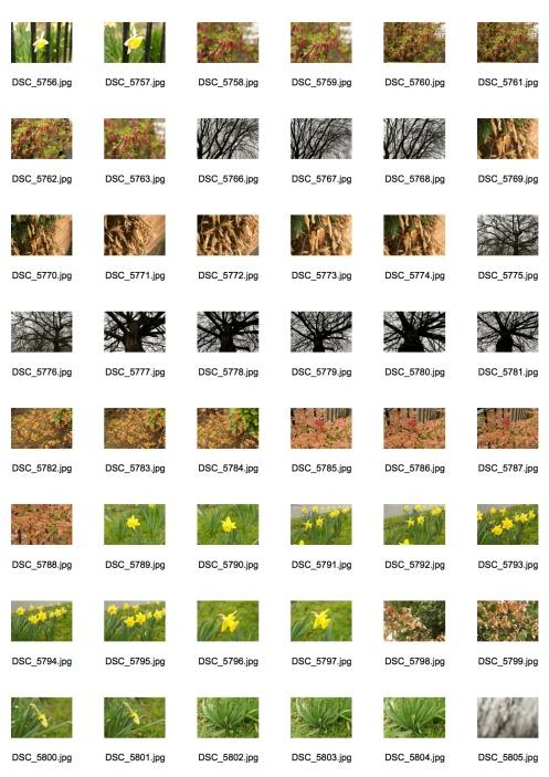 Spring 1 Contact Sheet 1