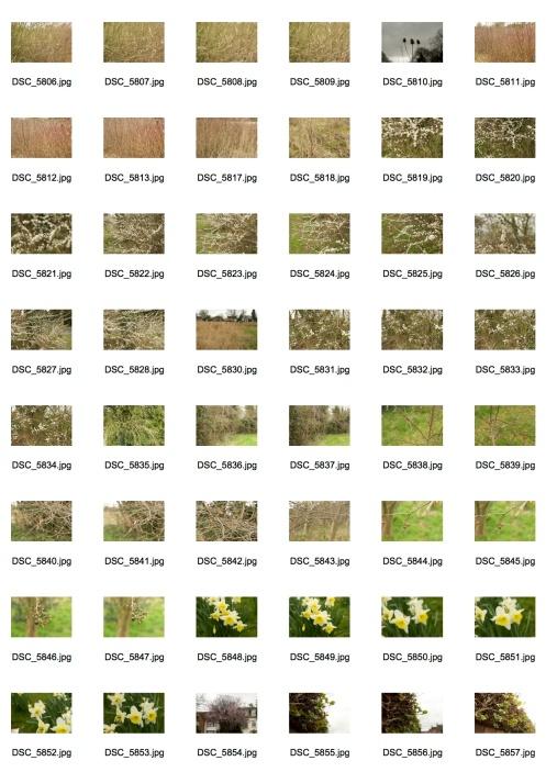 Spring 1 Contact Sheet 2