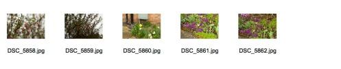 Spring 1 Contact Sheet 3